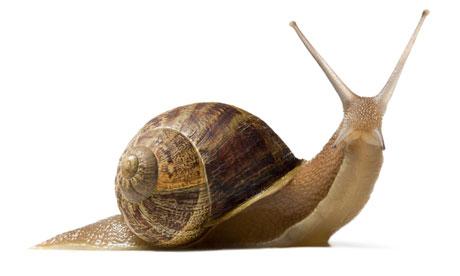Snail-008.jpg